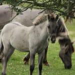 Deichlaeufer-FeWo-Umgebung_Pferd_002